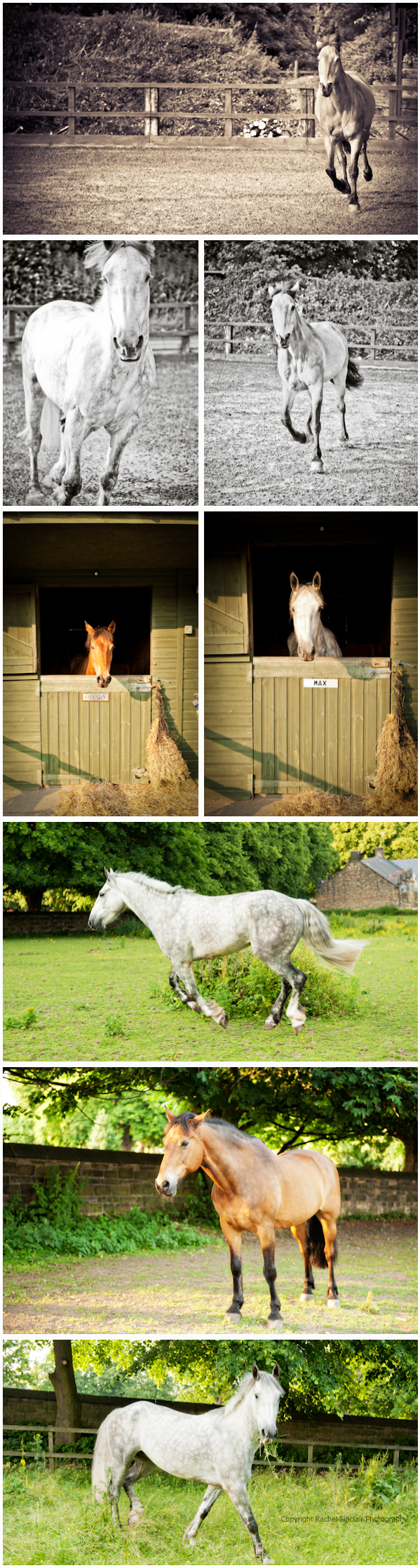 Equine Photography Sheffield